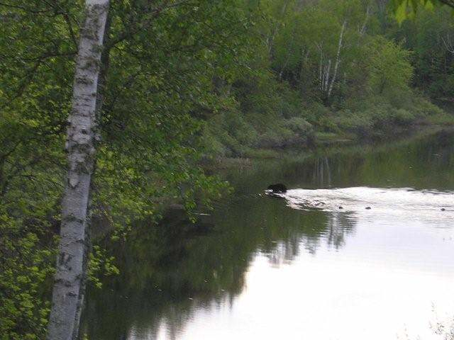 Lot 3 Turtle Rapids Ln, Mercer, WI 54547