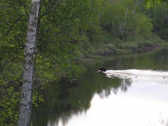 Lot B Turtle Rapids Ln, Mercer, WI 54547