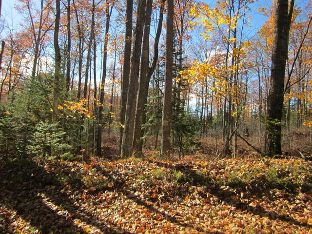 ON Mcpeak Rd #Lot 1, Conover, WI 54519