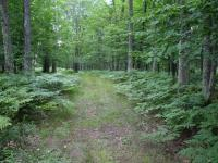 Lot 3 Lake Laura Rd E, Star Lake, WI 54561