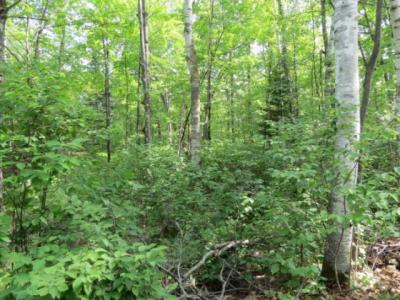 Photo of Lot 12 Bear Lake Rd, Boulder Junction, WI 54512