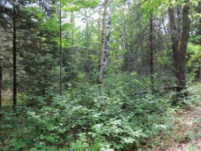 Photo of Lot 13 Bear Lake Rd, Boulder Junction, WI 54512
