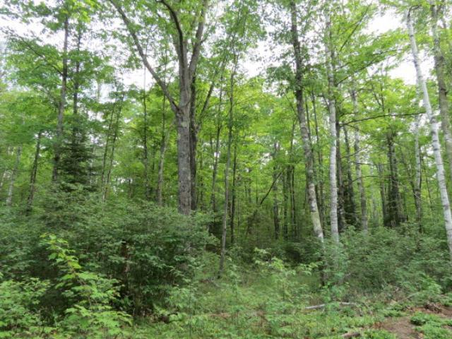 Lot 15 Bear Lake Rd, Boulder Junction, WI 54512