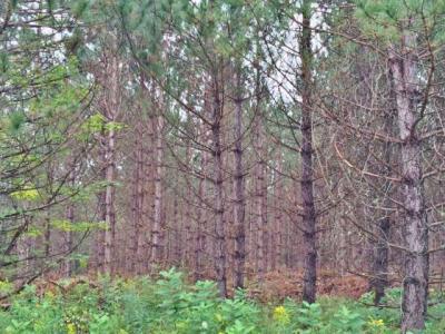 Photo of 80AC OFF Pine Lake Rd, Minocqua, WI 54548