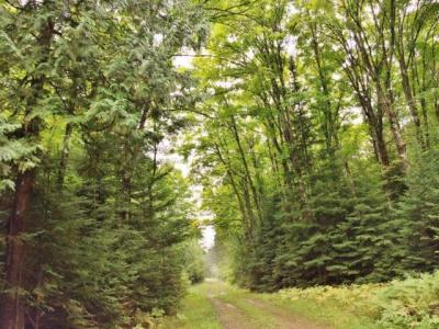 Photo of 255AC ON Hwy 70, Minocqua, WI 54548
