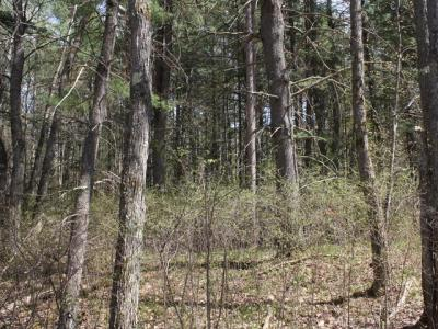 Photo of ON Frontier Cr W #Lot 73&74, Woodruff, WI 54568