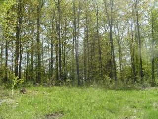 2379 Maple Branch Rd, Phelps, WI 54554