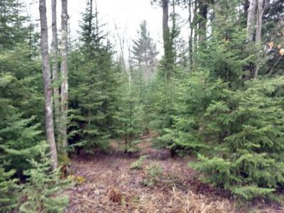 Photo of ON Jennie Webber Lake Rd, Sugar Camp, WI 54501