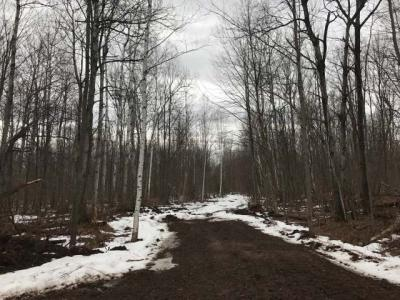 Photo of Tract 9 Price County Rd, Tripoli, WI 54564