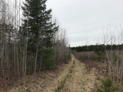 Photo of 80 ac. Willow Rd, Tripoli, WI 54564