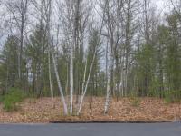 ON Wilderness Tr #Lot 4, Eagle River, WI 54521