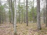 1798 Wilderness Tr #Lot 4, Eagle River, WI 54521 photo 5