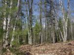 1798 Wilderness Tr #Lot 5, Eagle River, WI 54521 photo 3