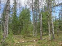ON Wilderness Tr #Lot 6, Eagle River, WI 54521