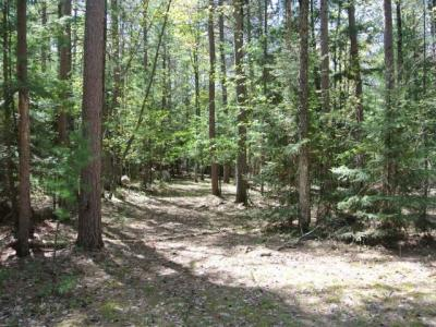 Photo of ON Chicken In The Woods Rd, Three Lakes, WI 54562