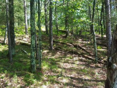 Photo of ON Flowage Rd, Conover, WI 54519