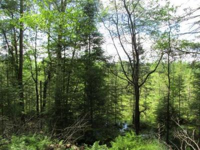 Photo of NEAR Hwy 17, Conover, WI 54519
