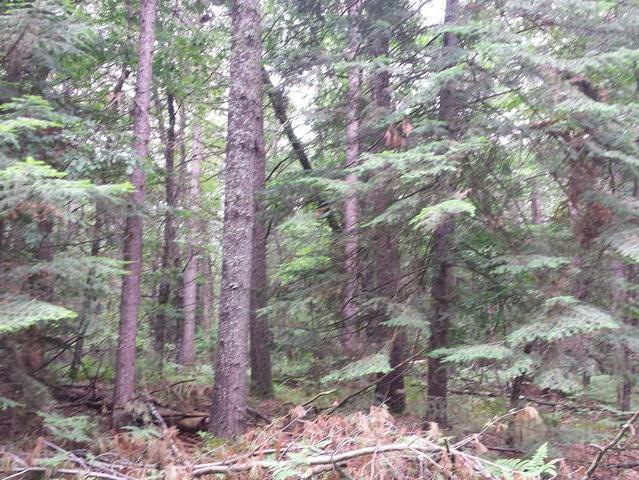 Lot 5 The Point Rd E, Tomahawk, WI 54487