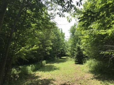 Tract 6 Forest Rd 130, Tripoli, WI 54564