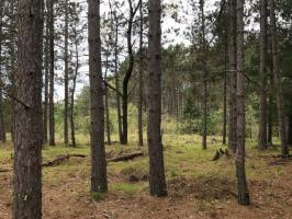 25 acres River Rd, Eagle River, WI 54521