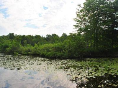 Photo of Lot on Maple Lake Dam Rd, Three Lakes, WI 54562