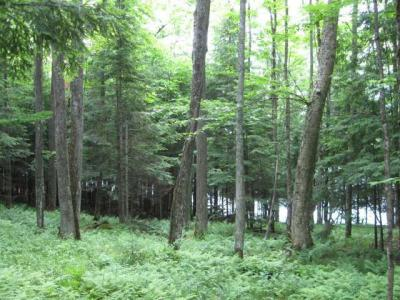 Photo of ON Rock Lake Rd W, Winchester, WI 54557
