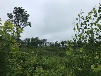 Photo of off Hwy 8, Tomahawk, WI 54487