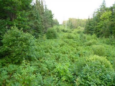 Photo of ON Cth A, Phelps, WI 54554