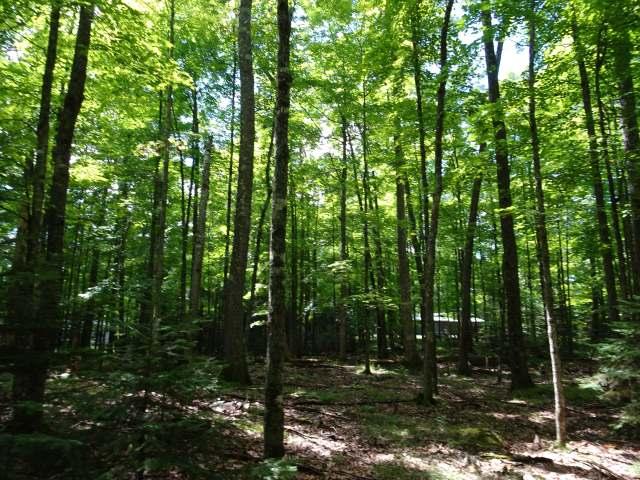 ON Birch Tree Ln, St Germain, WI 54558