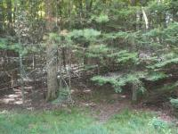 ON Maplewood Dr #Lot 18, St Germain, WI 54558