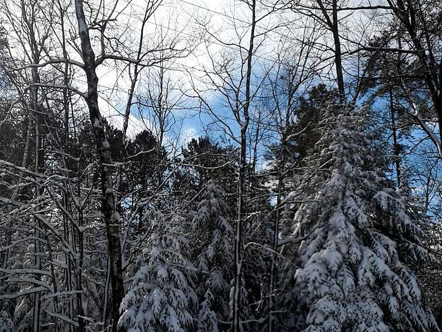 ON Pedycort Rd #Lot 24, St Germain, WI 54558