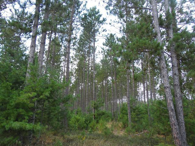 140 Acre Myers Rd, King, WI 54487