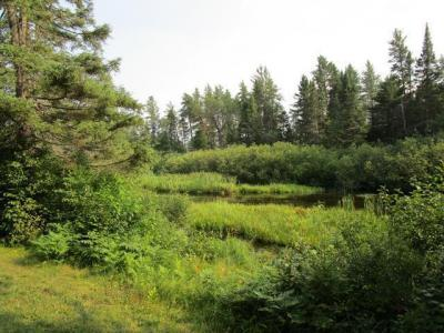 Photo of off of Hwy 45 #77 Acres, Land O Lakes, WI 54540