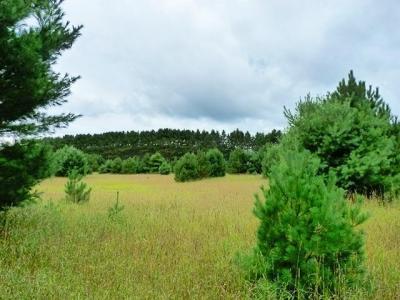 Photo of ON Oneida Farms Rd, Three Lakes, WI 54562