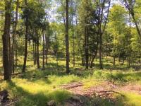 ON Hwy 17 #36.5ac, Phelps, WI 54554