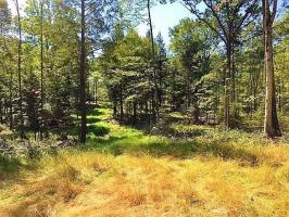ON Hwy 17 #24.7ac, Phelps, WI 54554