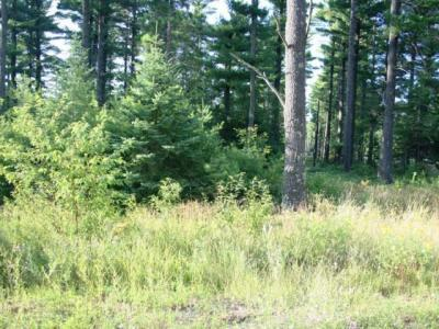 Photo of ON Zachs Ln, Conover, WI 54519