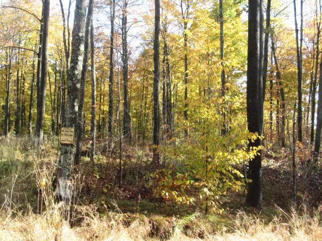 NEAR Woodland Dr #35 Acres, Wolf River, WI 54491