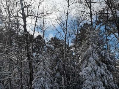 Photo of Lot 81 Lingo Ln, St Germain, WI 54558