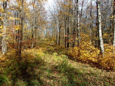 Photo of ON Collins Rd, Oma, WI 54534