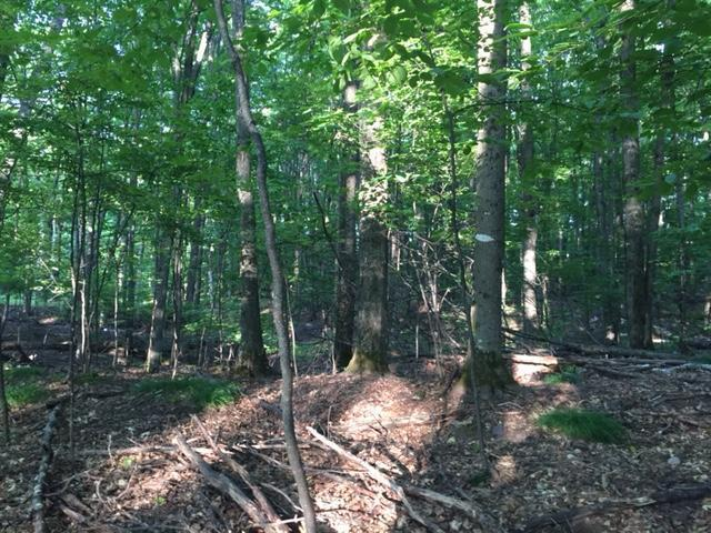 ON Forest Lake Rd E #Lot 29, Land O Lakes, WI 54540