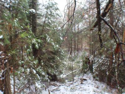 Photo of Lot On Birchwood Dr, St Germain, WI 54558