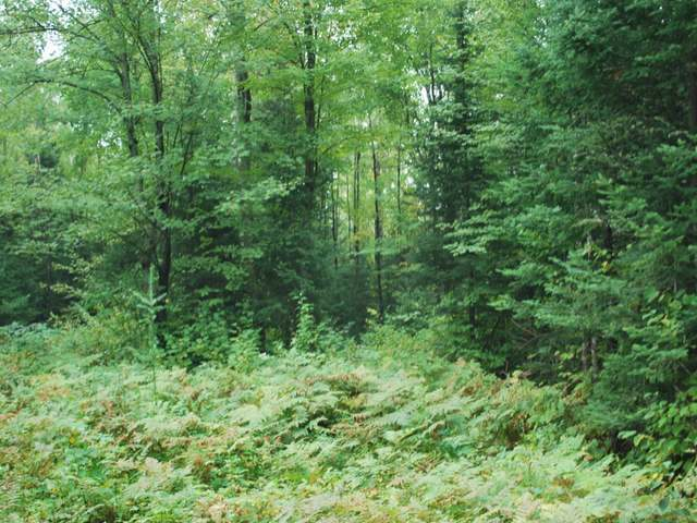 NEAR Old 8 Rd #Lot 2, Crandon, WI 54520