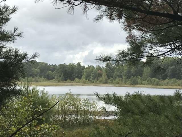 43 acres Carlson Rd, Land O Lakes, WI 54540