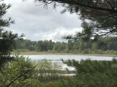Photo of 43 acres Carlson Rd, Land O Lakes, WI 54540