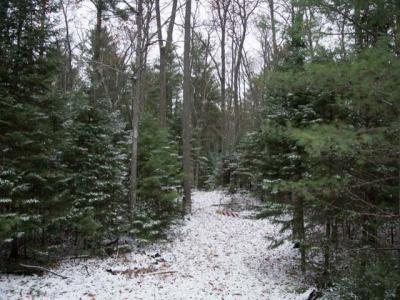 Photo of Lot 12 Maplewood Dr, Saint Germain, WI 54558