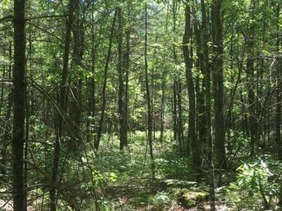 Photo of 15 acres Kilawee Rd, Minocqua, WI 54548