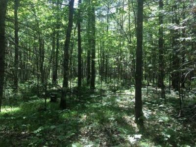 Photo of 20 acres Kilawee Rd, Minocqua, WI 54548