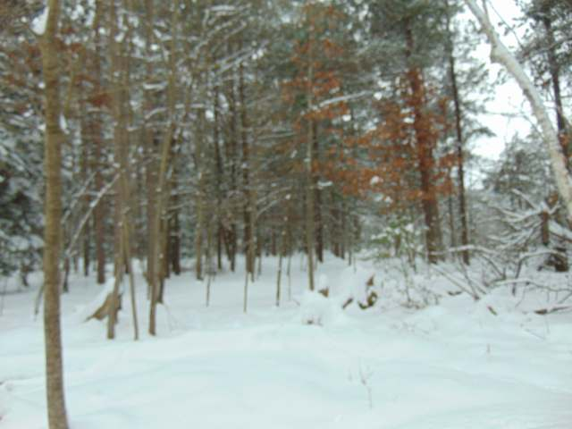 ON Bailey Dr #Lot 3, Woodruff, WI 54568
