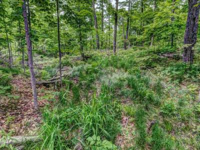 Photo of ON Cth E #19.22, Phelps, WI 54554